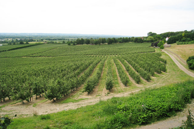 Orchards at Linton