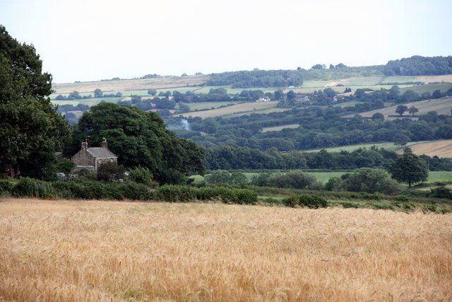 Barley field, Dronfield, Derbyshire