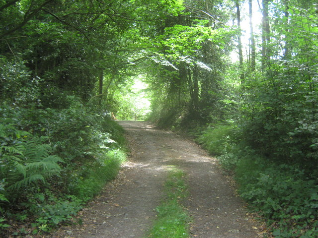 Bridleway in Mill Wood