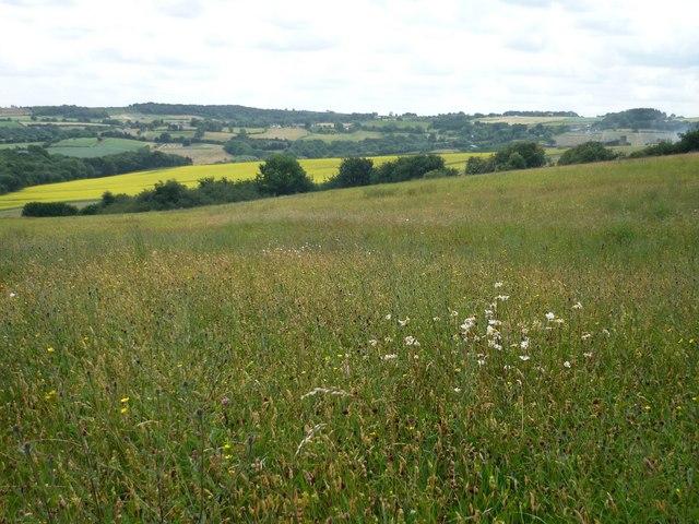 Hay Meadow, Moss Valley, Derbyshire