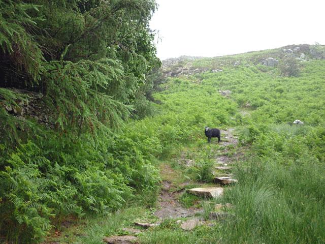 The path up Gowbarrow Fell