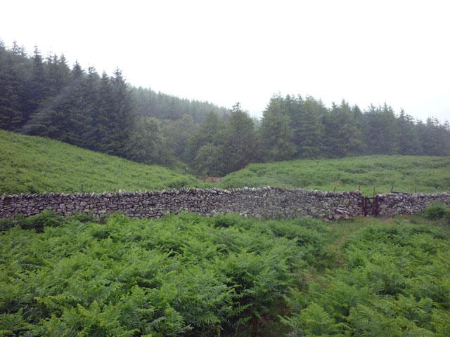 The path into Swinburn's Park plantation