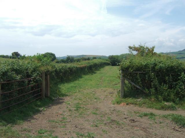 Field gate by Chilcombe Lane