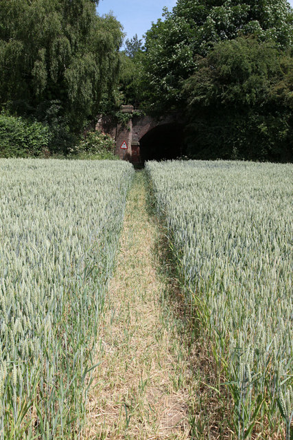 Footpath running through cornfield
