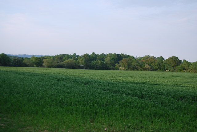 A large field of wheat north of Charcott