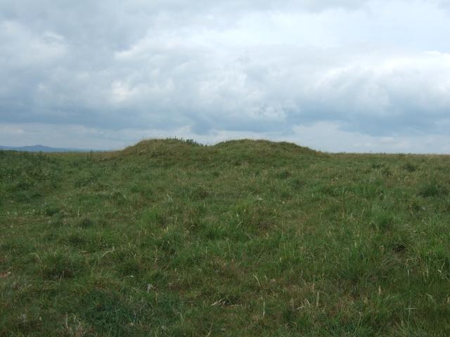 Tumulus on Eggardon Hill