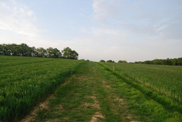 Footpath through the wheat fields