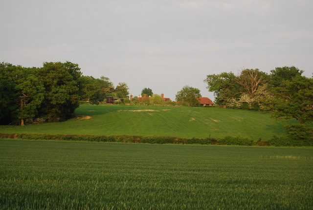 Looking across the wheat to Wickhurst