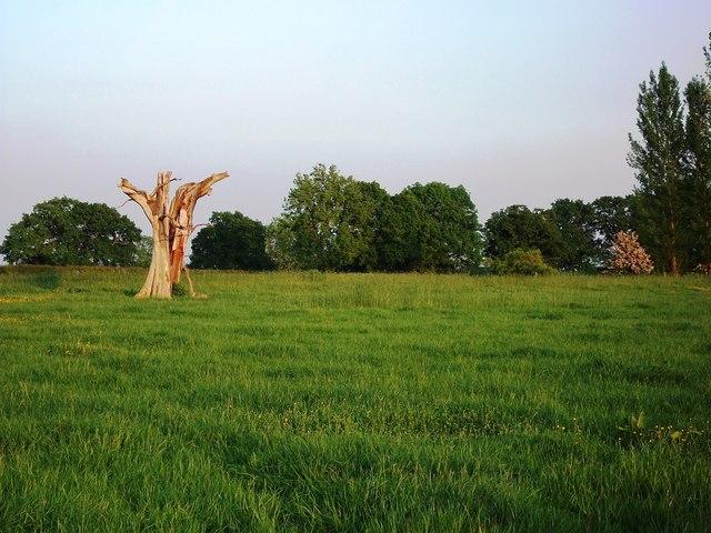 Sculptural old tree stump near Black Hales Farm