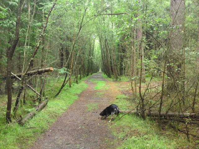 Scone Wood