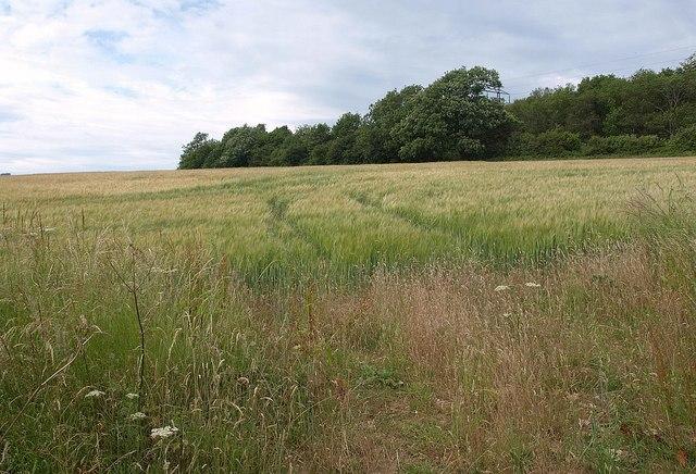 Field Grove