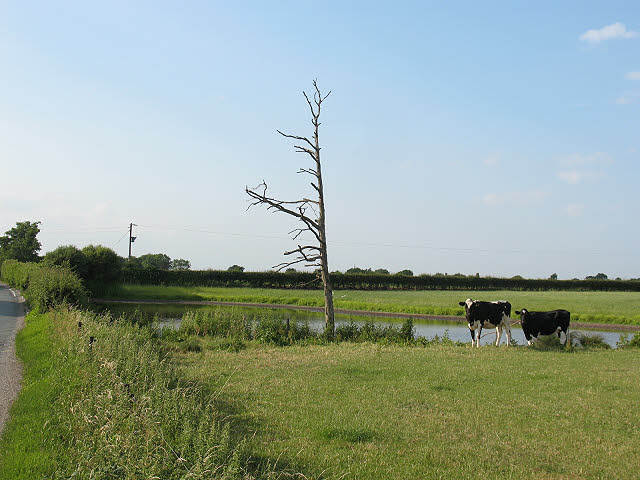 Pond with cows at Blue Slates Farm