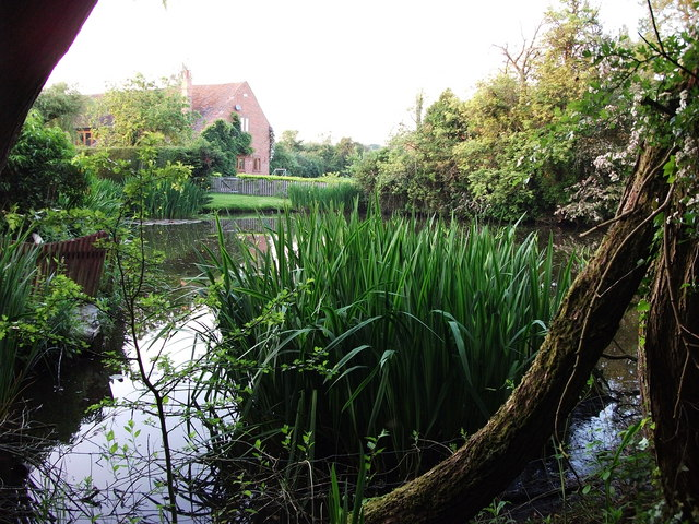 Pond at Beanit Farm, Hob Lane