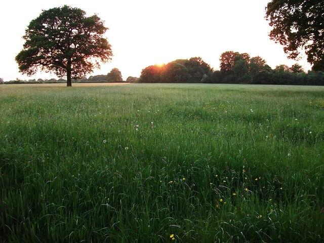 Sunset over Beanit Spinney