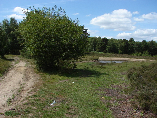 Sheet's Heath