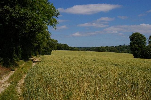 Fields west of Farnborough