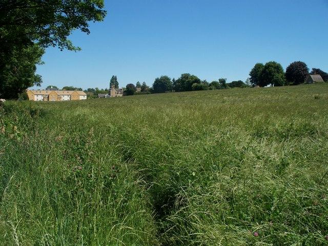 Grassy field [1]