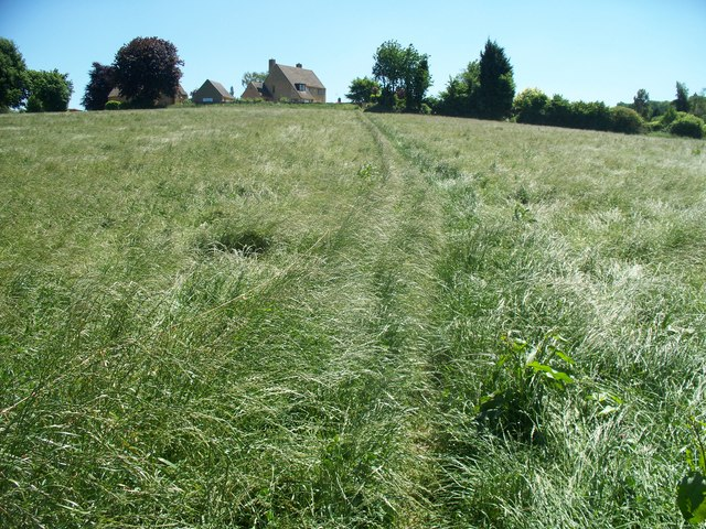 Grassy field