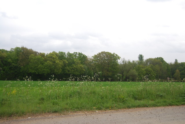 Trees and field by Freshfield Lane