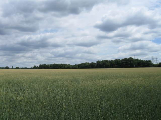 Wheat field north of Toothill Road