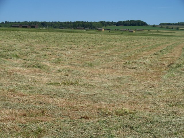 Grass becoming hay