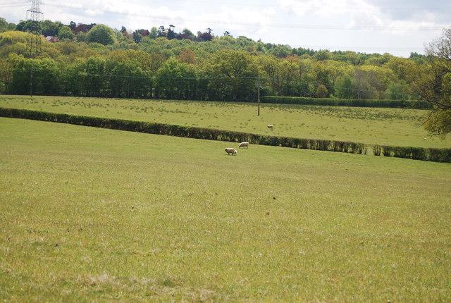 A small flock! Lindfield Farm