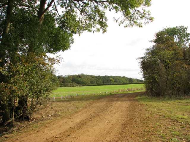 Farm track past cultivated fields