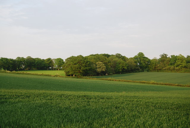 Woodland and wheat near Wickhurst
