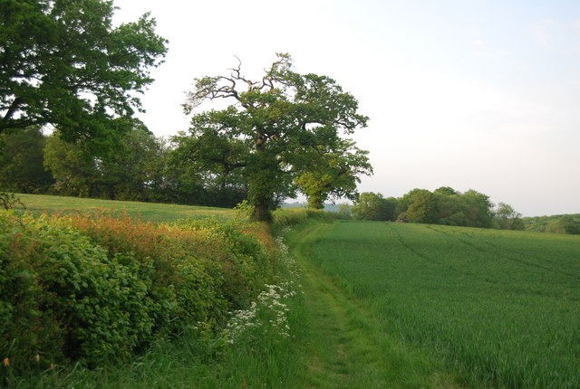 Footpath following the hedge north