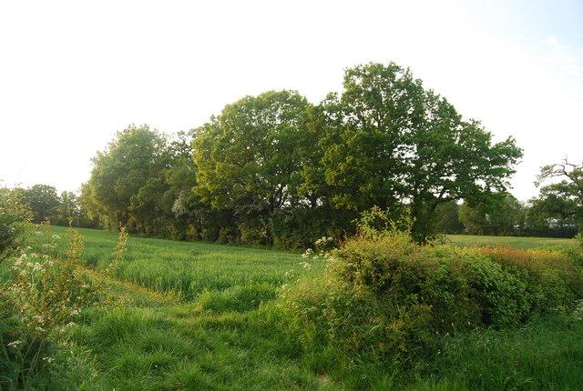 Footpath to Wickhurst