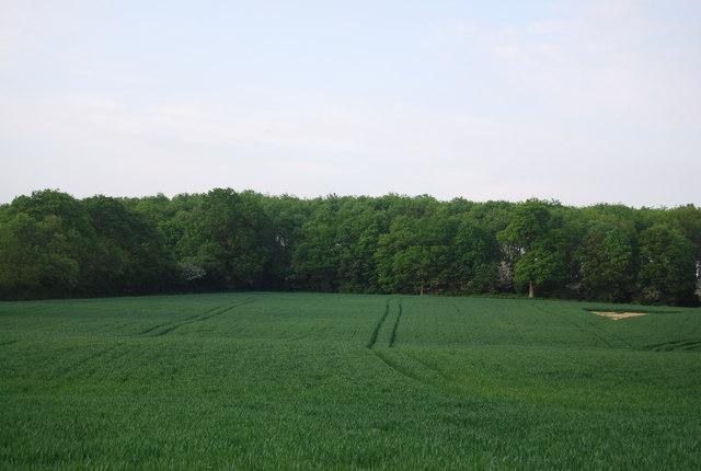 Hale Wood
