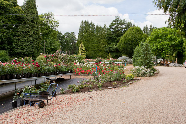 Pococks Roses, Jermyns Lane