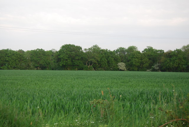 Woodland and wheat off Hale Oak Rd