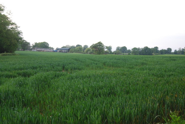 Hale Farm across a wheat field