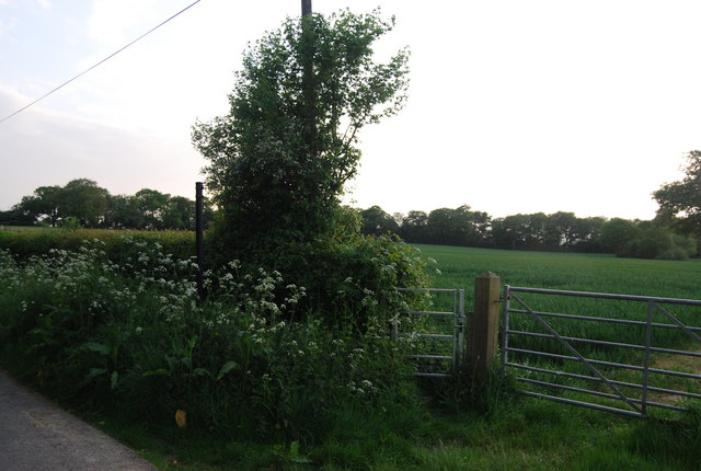 Footpath off Hale Oak Rd