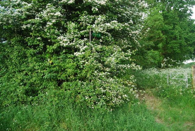 Footpath sign in the bush, Hale Oak Rd