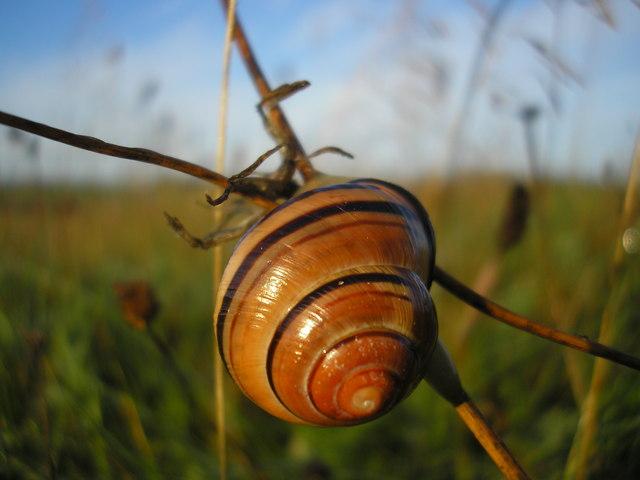 Snail, Lindean Reservoir