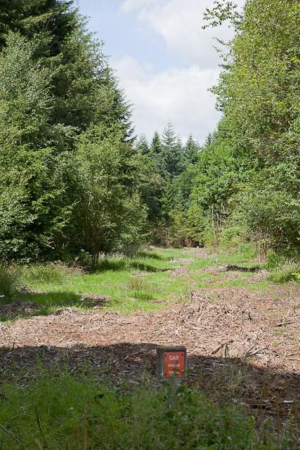 "36"" Gas Pipeline in Ampfield Wood"