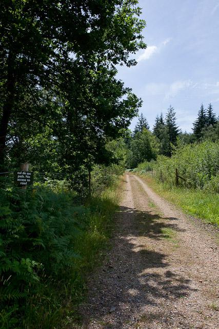 Dead-end footpath in Ampfield Wood