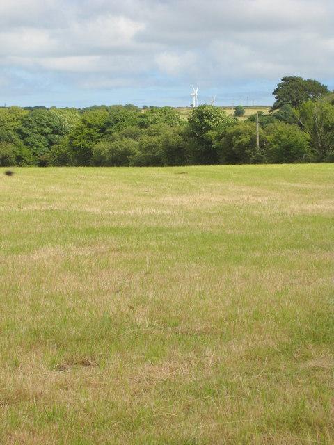 Field at Trevales