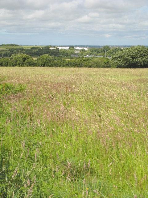 Hay field at Trevales