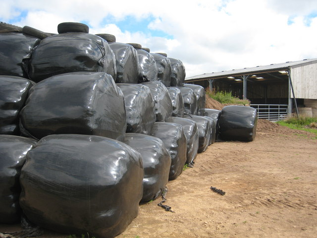 Silage bales at Trevales