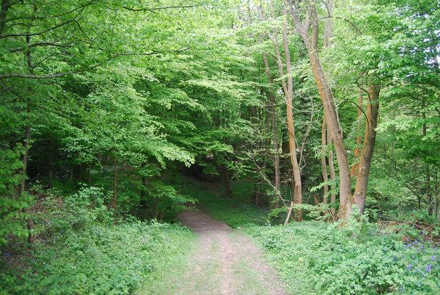 Footpath in Warr's Wood