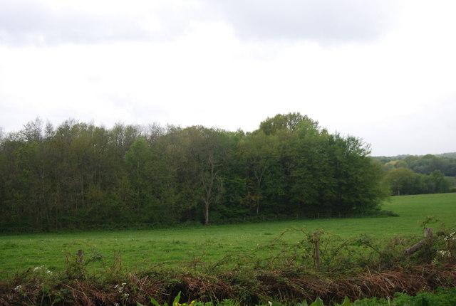 Wildboar Wood