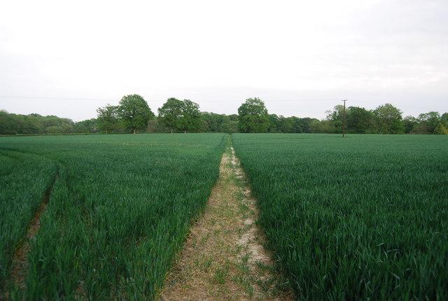 Footpath off Hale Oak Rd through wheat fields