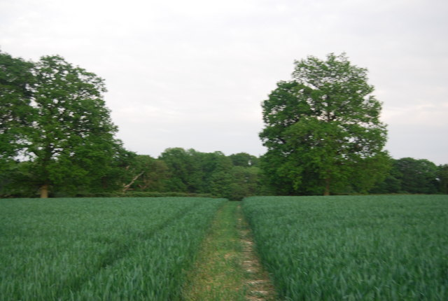 Footpath through wheat fields, Brownings Farm