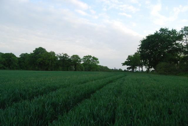 Wheat, Brownings Farm