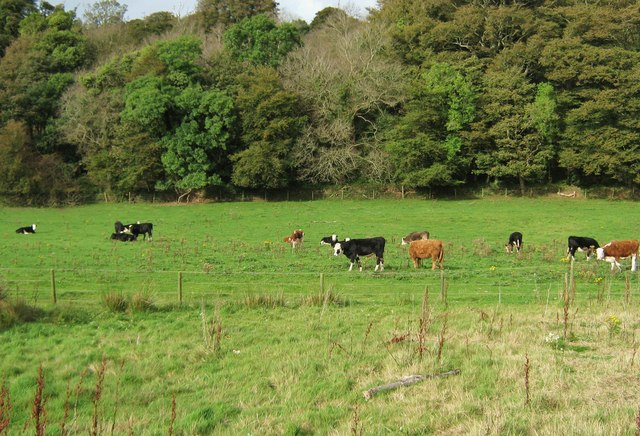 Field beside the loch
