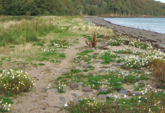 A lochside path