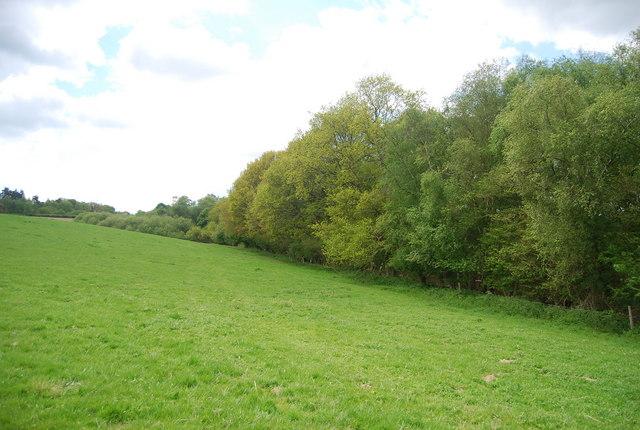Woodland and field near Lane End Farm